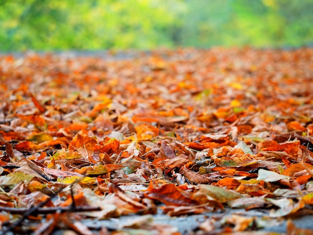 Autumn forest leaves background