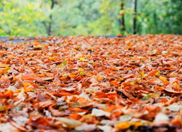 Autumn forest leaves low angle background
