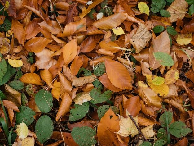 秋の森は自然旅行で道を去る