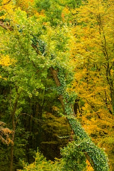 Autumn forest nature. beautiful autumnal landscape with yellow leaves. colorful foliage in the forest, natural background.