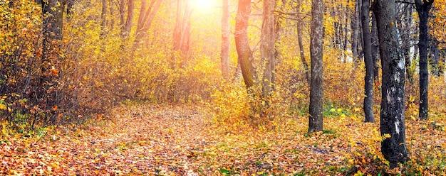 色とりどりの木々と落ち葉で覆われた道のある晴れた日の秋の森。自然の美しさ