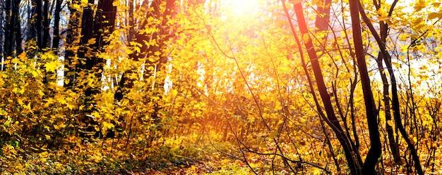色とりどりの木々、パノラマと晴れた日の秋の森。自然の美しさ