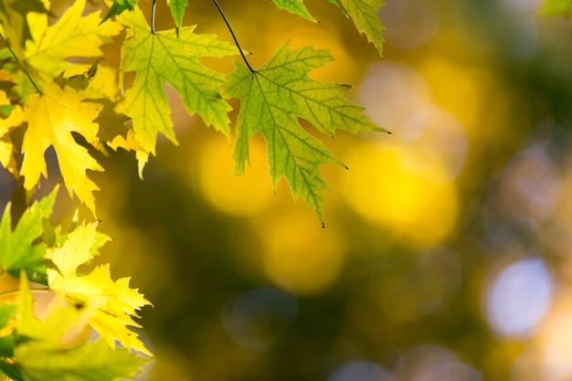 晴れた日の秋の森