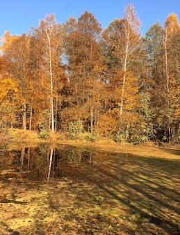 黄色い落ち葉で覆われた湖の水に映った秋の森