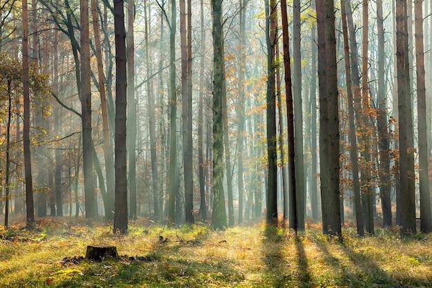 木々の間から光線が当たる秋の森のシーン