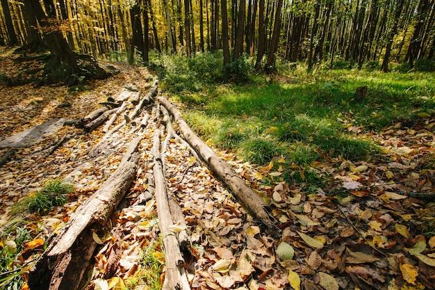 道のある秋の森の風景