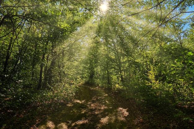 Осенний лесной пейзаж с лучами теплого света