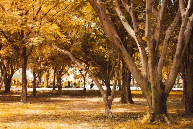 Paesaggio di foresta autunnale con raggi di luce calda che illumina il fogliame d'oro e un sentiero che conduce alla scena