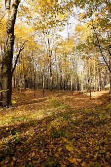가을 숲-가을 시즌 동안 숲.
