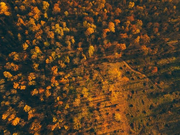 秋の森のトップビューの風景。秋の森の秋の鳥の目のシーン。