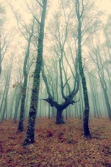 Осеннее лесное дерево