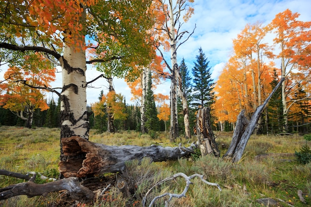 Autumn forest trees in dixie national forest, utah