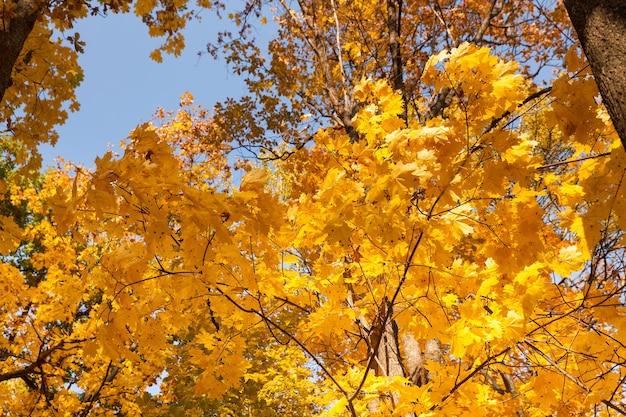 Осенние лесные деревья. природа зеленый дерево солнечный свет