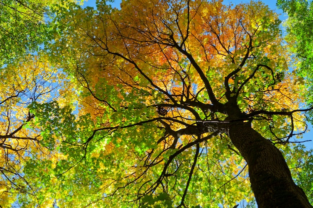 秋の森の木々。自然の緑の木の日光。