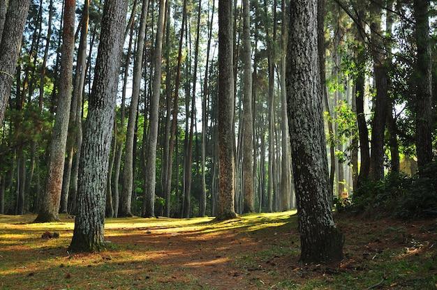 가을 숲 나무. 자연 녹색 나무