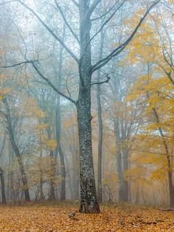 秋の森の木々黄色の葉霧の自然。高品質の写真