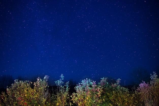 Осенний лес под синим темным ночным небом со многими звездами. космический фон
