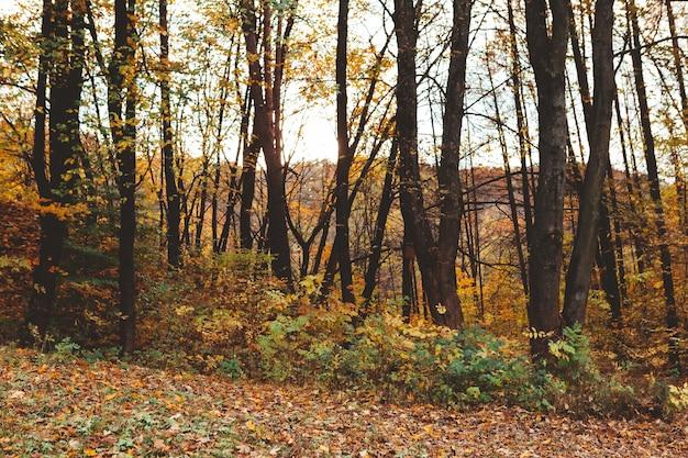 秋の森の景色のコピースペース