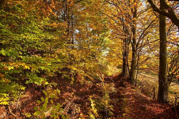 Осенний лес. яркий октябрьский день в красочном лесу.