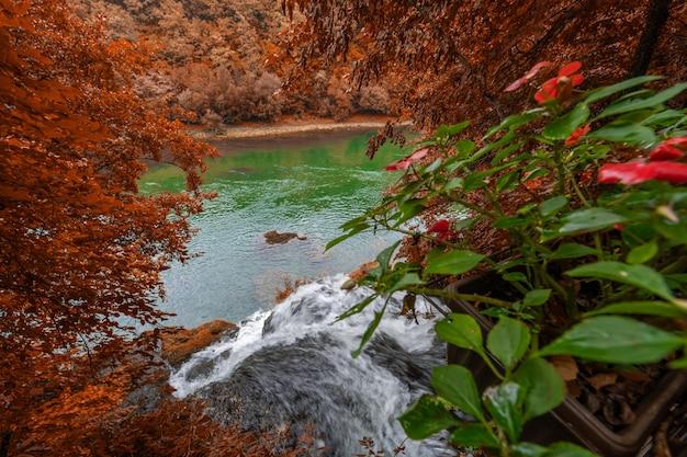 秋の森の滝