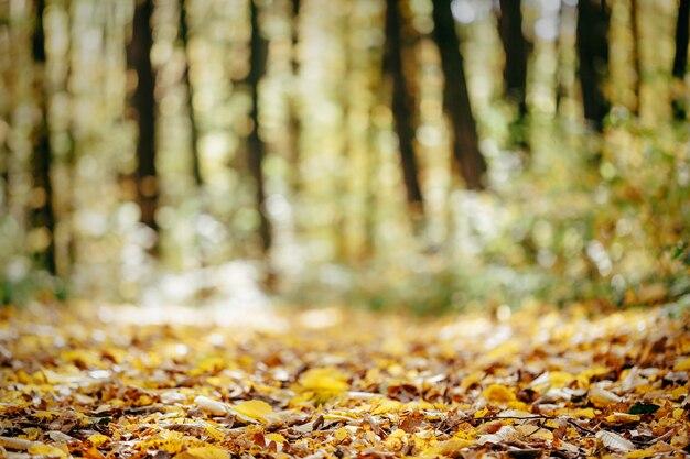 紅葉のある秋の森
