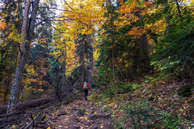 鮮やかな色の秋の森