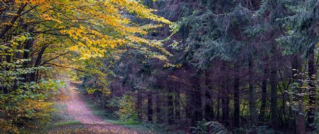 木々に色とりどりの葉と森の中の道のある秋の森