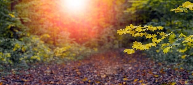 Осенний лес с разноцветными листьями на деревьях во время заката. кленовая ветка с желтыми листьями в осеннем лесу, красота в природе
