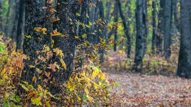 晴天時の木々に色とりどりの葉が咲く秋の森