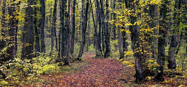色とりどりの木々と落ち葉で覆われた道のある秋の森。自然の美しさ