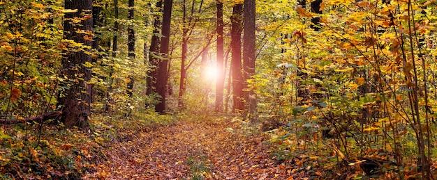 色とりどりの木々が生い茂る秋の森と、日没時に落ち葉で覆われた道。自然の美しさ
