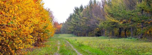 다채로운 나무와 넓은 비포장 도로가있는 가을 숲