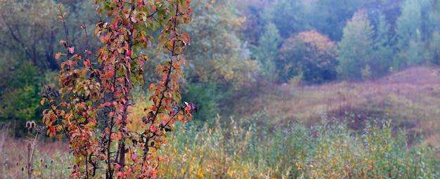 Осенний лес с красочными деревьями в пасмурную погоду, панорама Premium Фотографии