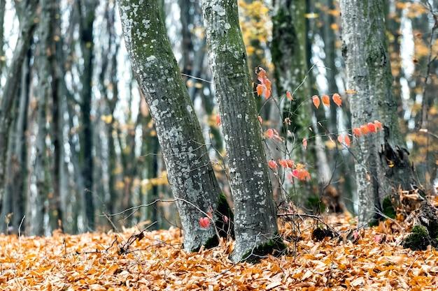 落ち葉が地面に落ちた秋の森