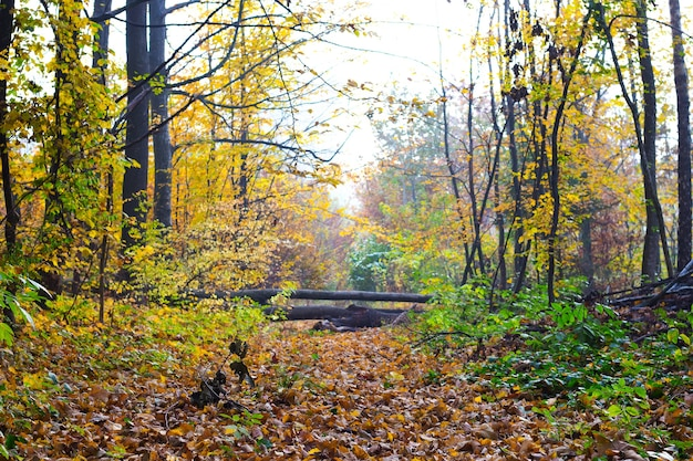 Autumn forest with fallen trees that overlap the road_