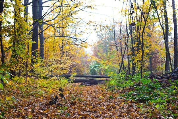 倒木が道路に重なっている秋の森_
