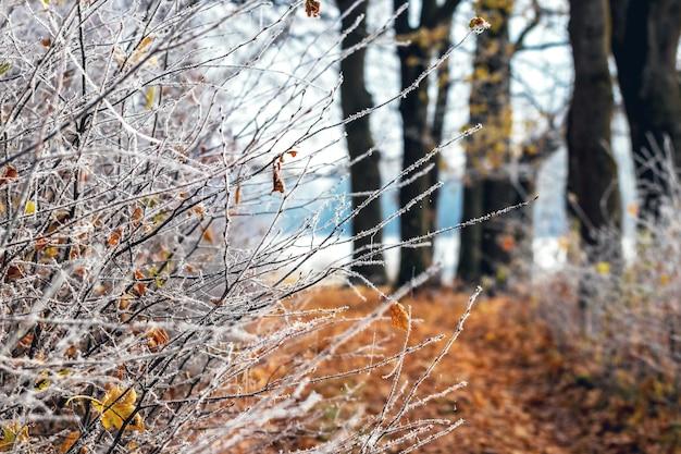 霜に覆われた木の枝と地面に落ち葉がある秋の森