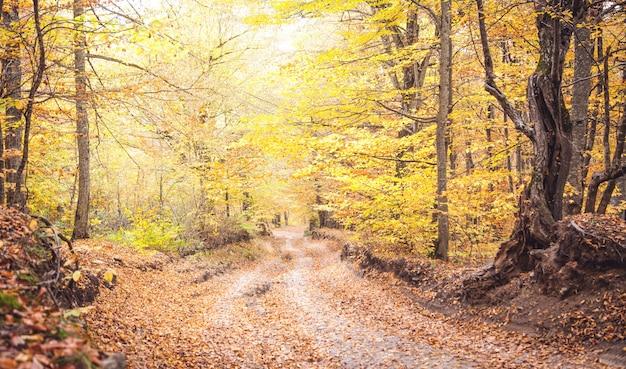 地上道路のある秋の森。美しい風景
