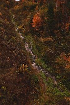 黄色と赤の木々に囲まれたマウンテンクリークのある秋の森上からの眺め自然の背景