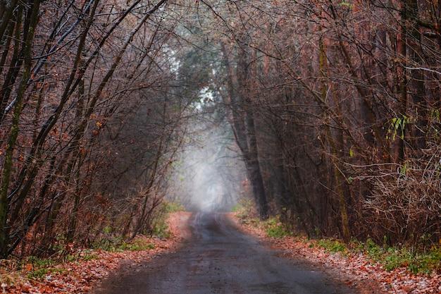 田舎道のある秋の森