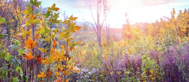晴天時の木々や低木の茂みのある秋の森