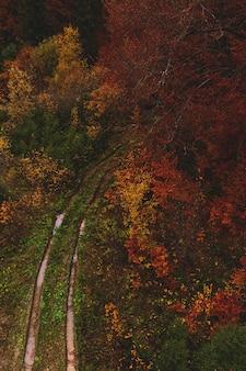 黄色と赤の木々の間のぼやけた道路からの痕跡と秋の森上からの眺め自然の背景