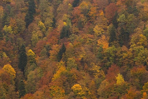 Осенний лес с желтыми и оранжевыми листьями на верхушках деревьев