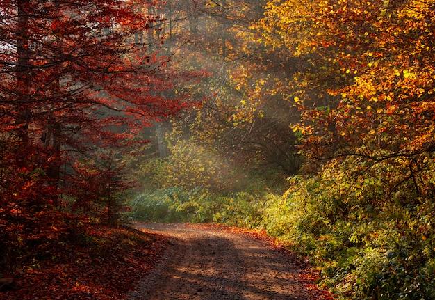 黄色と赤の葉で秋の森