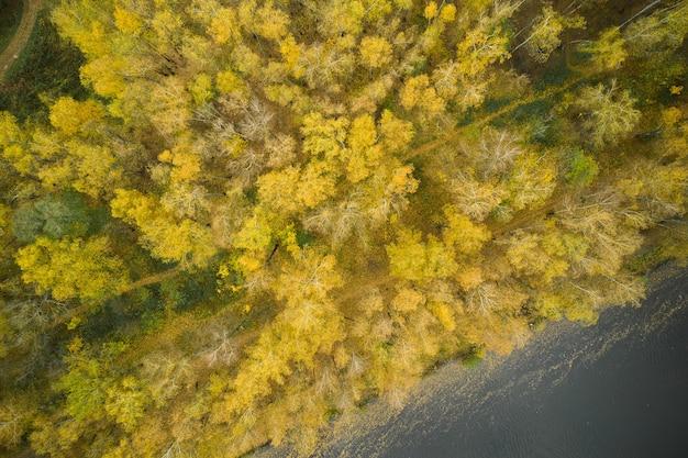 Осенний лес, в реке плывут желтые листья, вид с высоты птичьего полета