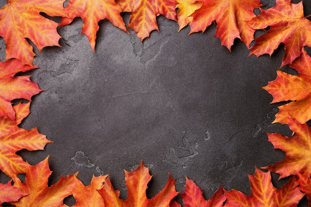 Autumn frame from bright vivid red and yellow maple leaves on black shimmering background.