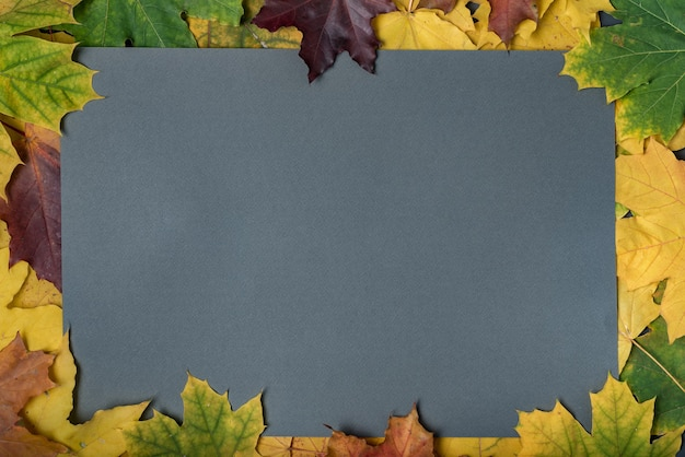 Осенняя рамка из желтых листьев. серый фон. шаблон. фон. макет