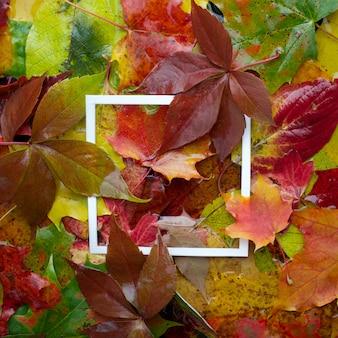 흰색 프레임 잎으로 만든 가을 프레임. 평면 평신도, 평면도. 프리미엄 사진
