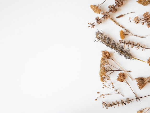 乾燥した別の植物と白い背景の上の花の秋のフレーム。上面図。フラット横たわっていた。コピースペース