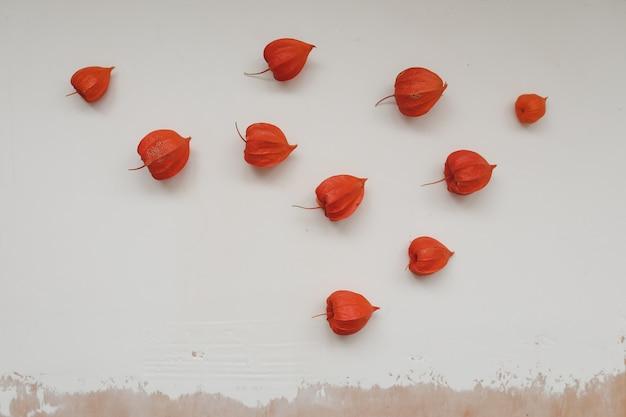 白いテクスチャ背景の上面図に赤いサイサリスの花と秋のフレーム
